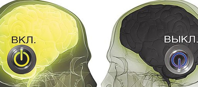 теория мозга1
