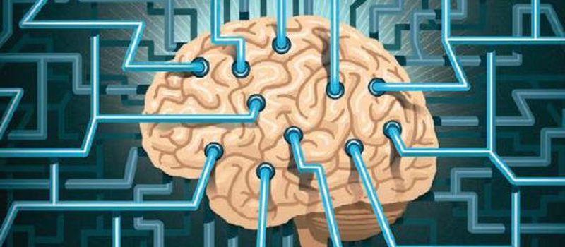 Терия мозга курс